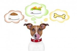 hungry jack russell dog thinking about the choice between food bowl, vegan bowl or a big bone , in 3 speech bubbles, isolated on white background